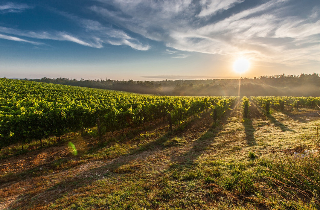 vineyard sunset, Travel Destinations Wine Lovers